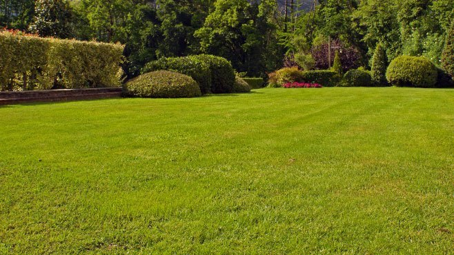 Fertilise your lawn at least 3 times per year for best results
